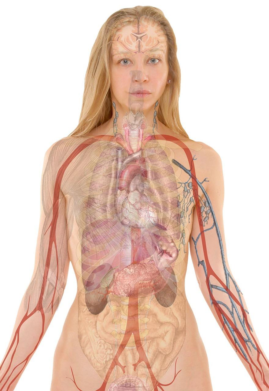 anatomie vrouw
